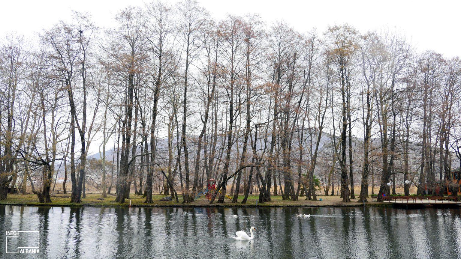 Burimet e Drilonit në Pogradec, foto nga IntoAlbania