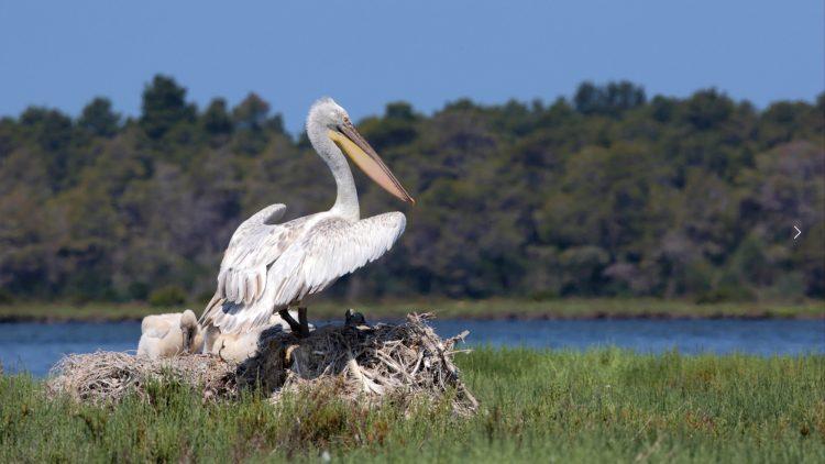 Bird-Watching in Albania